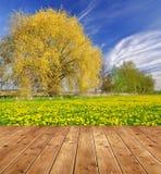 skyen för showen för växter för rörelse för den förfallna för fältet för blueoklarhetsdagen ligganden för fokusen fulla gröna var Arkivfoton