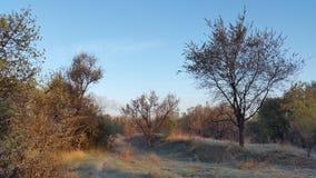 skyen för showen för växter för rörelse för den förfallna för fältet för blueoklarhetsdagen ligganden för fokusen fulla gröna var Arkivbild
