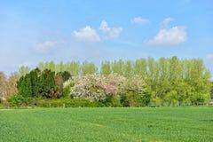 skyen för showen för växter för rörelse för den förfallna för fältet för blueoklarhetsdagen ligganden för fokusen fulla gröna var Arkivbilder