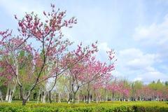 skyen för showen för växter för rörelse för den förfallna för fältet för blueoklarhetsdagen ligganden för fokusen fulla gröna var Arkivfoto