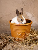 Skygga kanin i blomkruka Arkivbild