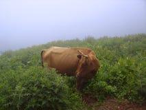 Skygga kon i berg som ser som det från den Milka chokladannonseringen royaltyfri fotografi