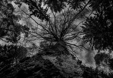Low angle view of trees and sky. A low-angle view of the sky and the trees in the forests in Kouvola, Finland, in black and white Stock Photos