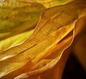 Skyla det gula orange bladet Fotografering för Bildbyråer