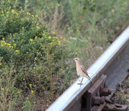 Skylark on Rails railway Stock Images