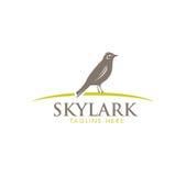 Skylark Wildlife Bird Vector Illustration Sign Concept. Stock Images