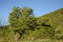 Skyline-Antriebs-Baum im Sommer Stockfotografie