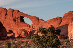 Skyline Arch. Arch Along Sandstone Skyline with Juniper Tree in Foreground Stock Photos