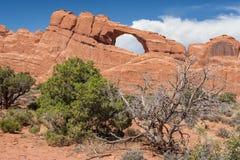 Skyline-Bogen und trockene Bäume im Bogen-Nationalpark Utah USA Lizenzfreie Stockfotografie