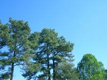 Skyline da árvore fotos de stock