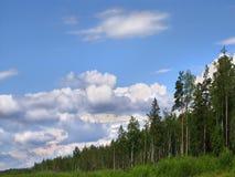 Skyline da floresta Fotos de Stock Royalty Free