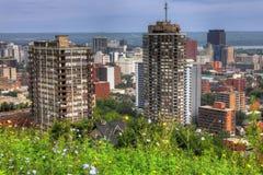 Skyline de Hamilton, Canadá com os wildflowers no primeiro plano foto de stock royalty free