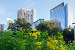 Skyline from Discovery Green Stock Photography