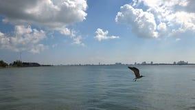 Skyline do centro do porto de Miami Beach filme