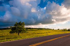 Skyline Drive and tree in Big Meadows, Shenandoah National Park Stock Photography