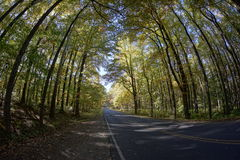 Skyline Drive - trees and road Royalty Free Stock Photo