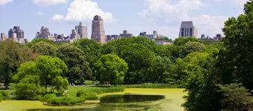 Skyline from a garden. NYC buildings from Central Park Royalty Free Stock Images