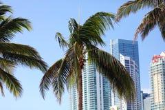 Skyline Miamis im Stadtzentrum gelegene Brickell-Gebäude in der Miami-Flussufergegend Stockbilder