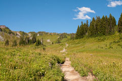 Skyline trail, mt Rainier, Paradise Valley Royalty Free Stock Image