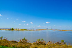 Skyline of wetland Royalty Free Stock Photography