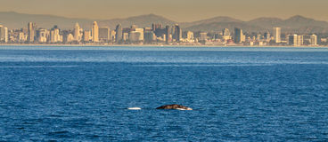 Skyline whale royalty free stock photo