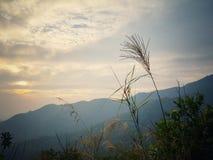 Skymning i Hok Tau Reservoir Royaltyfri Bild