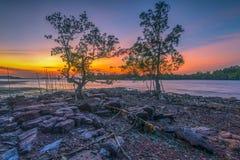 Skymning i mangroveträdet arkivbilder