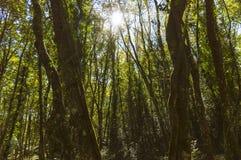 Skymning i skogen Arkivbilder