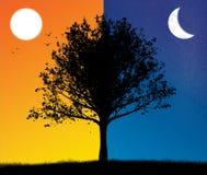 Skymning- och nattträdkontur med solen och månen stock illustrationer