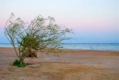 Skymning på stranden i Egypten arkivfoton