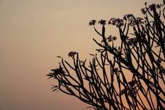 skymning Solnedgången till himlen är röd med skuggan av trädet Arkivbild