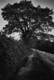 Skymning, träd och väg i mörkret arkivfoton