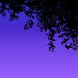 Skymning under hängande över vinrankor stock illustrationer