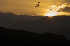 Skymningflyg Royaltyfri Fotografi