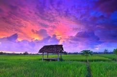 skymninghimlen ovanför risfälten royaltyfri fotografi
