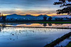 Skymninghimmel på risfältet Arkivbild