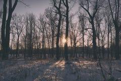 Skymninglandskap av Starburst till och med träd Royaltyfria Foton