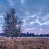 Skymningplats på ett stillsamt hed-land, Nederländerna fotografering för bildbyråer