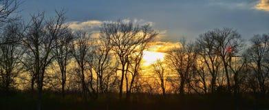 Skymningsolnedgångsikter till och med vinterträdfilialer vid Opryland längs Shelby Bottoms Greenway och det naturliga området Cum arkivbild