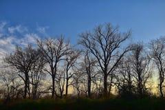 Skymningsolnedgångsikter till och med vinterträdfilialer vid Opryland längs Shelby Bottoms Greenway och det naturliga området Cum royaltyfri bild