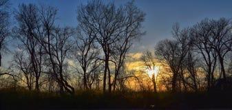 Skymningsolnedgångsikter till och med vinterträdfilialer vid Opryland längs Shelby Bottoms Greenway och det naturliga området Cum royaltyfri foto