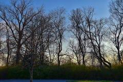 Skymningsolnedgångsikter till och med vinterträdfilialer vid Opryland längs Shelby Bottoms Greenway och det naturliga området Cum arkivfoton