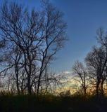 Skymningsolnedgångsikter till och med vinterträdfilialer vid Opryland längs Shelby Bottoms Greenway och det naturliga området Cum arkivbilder