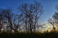 Skymningsolnedgångsikter till och med vinterträdfilialer vid Opryland längs Shelby Bottoms Greenway och det naturliga området Cum royaltyfria bilder