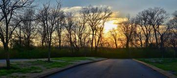 Skymningsolnedgångsikter till och med vinterträdfilialer vid Opryland längs Shelby Bottoms Greenway och det naturliga området Cum arkivfoto