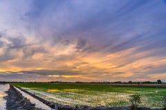 Skymningtid på att förbereda land för att plantera på risfältet Arkivfoto