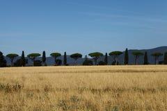 Skymt av den Tuscan bygden, sörjer och lärker arkivbilder