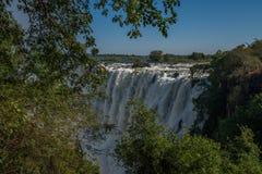 Skymt av Victoria Falls inramade vid filialer Royaltyfri Foto