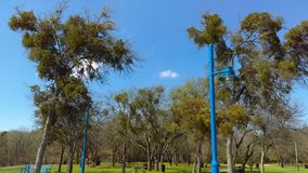 Skys bleus image libre de droits