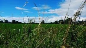 skys Irlanda do Norte do verão Imagens de Stock